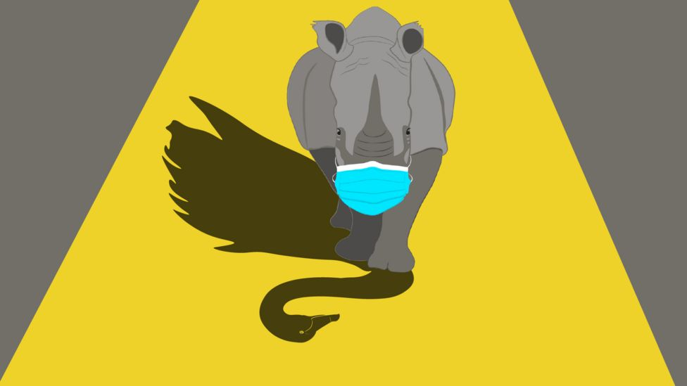 image of a gray rhino wearing a surgical mask with a black swan in its shadow